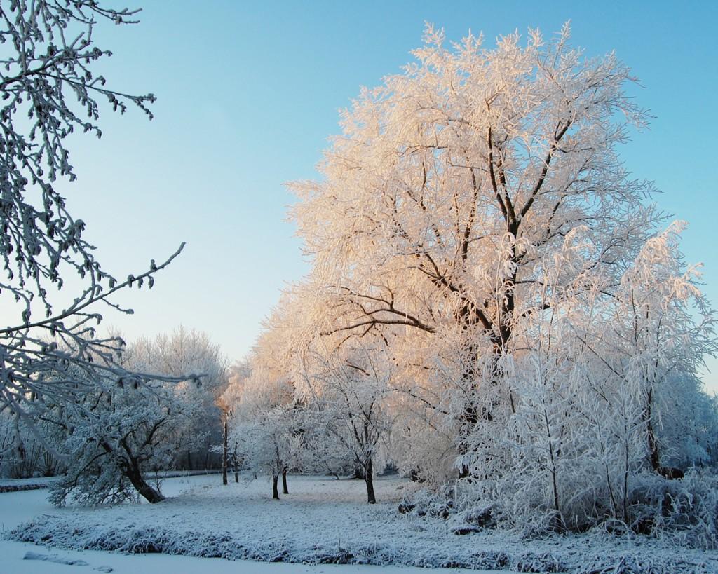 Sneeuw-Weegje. Dick Mudde, Wikimedia Commons