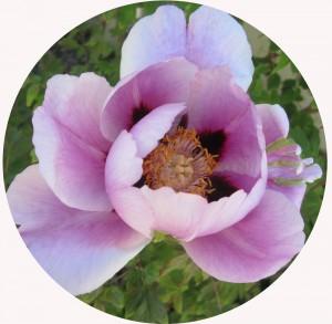 BlommaRund