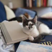 Profilbild för Nora (bibliotekarie på Motala bibliotek)