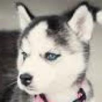 Profilbild för Ztarrs